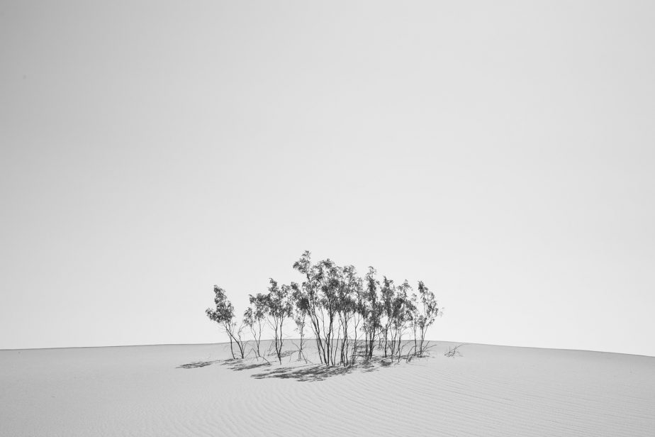 Small grove of trees growing on a sand dune